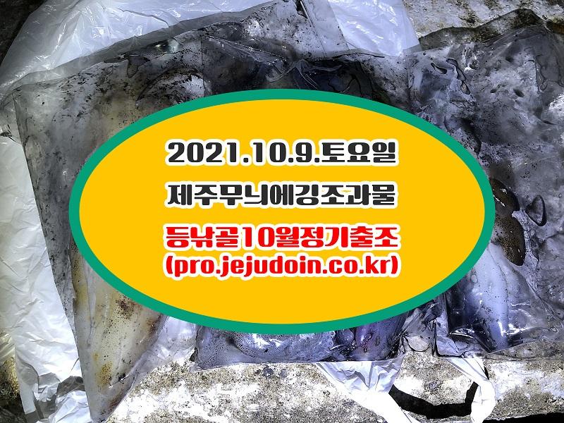 950937409c2ab537fb0370a4264941e7_1633833397_9013.jpg